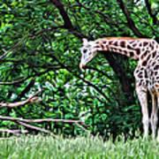 Pensive Giraffe Poster