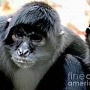 Pensive Monkey Poster