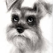 Pensive Schnauzer Dog Painting Poster