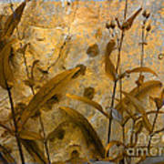 Penstemon Abstract 6 Poster