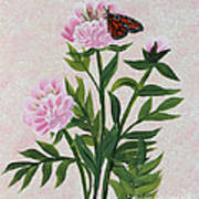 Peonies And Monarch Butterfly Poster