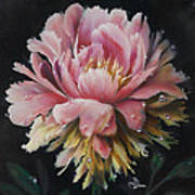 Peony Poster by Lynette Yencho