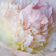 Peony Perfection Poster