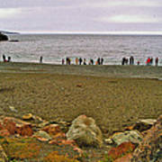 People Lined Up To Catch Capelin On The Shore Of Middle Cove-nl Poster