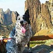 Pepper At Smith Rock Poster