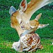 Pere David Deer And Fawn Poster