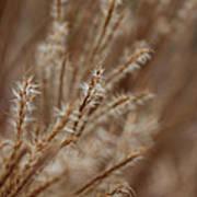 Perennial Grass Poster