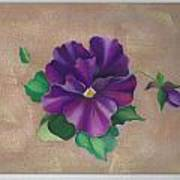 Perfect Pansy Poster