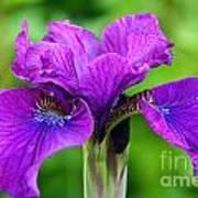 Perfect Purple Specimen Poster