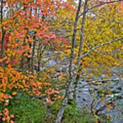 Perkiomen Creek - Perkiomenville Pa - Autumn Foliage Poster