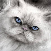 Persian Cat With Blue Eyes Poster