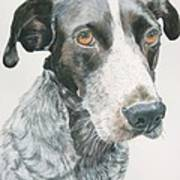 Pet Portrait Dog Art Print Hire Commission Pet Portrait Artist Poster