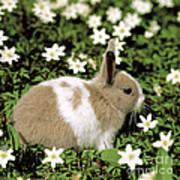 Pet Rabbit Poster by Hans Reinhard/Okapia