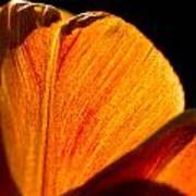 Petals And Sun Poster