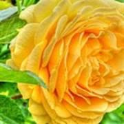 Petals Of Sunshine Poster