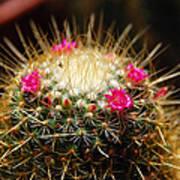 Petite Cactus Poster