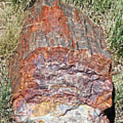 Petrified Stump Poster