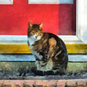 Pets - Tabby Cat By Red Door Poster