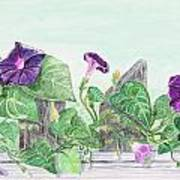 Petunias On The Fence Poster