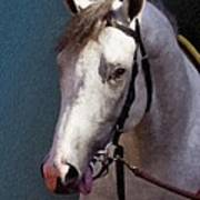 Phantom Lover - Portrait Of A Race Horse Poster