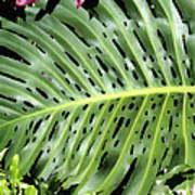 Philodendron 6 Poster