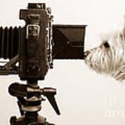 Pho Dog Grapher Poster
