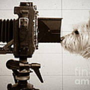 Pho Dog Grapher - Ground Glass View Poster