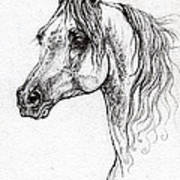 Piaff Polish Arabian Horse Drawing 1 Poster