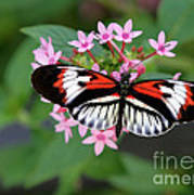 Piano Key Butterfly On Pink Penta Poster