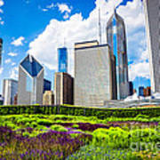 Picture Of Lurie Garden Flowers With Chicago Skyline Poster