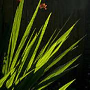 Piercing Green Poster