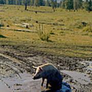 Pig In Mud Poster