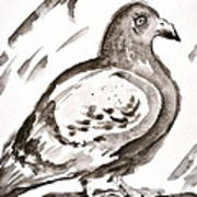 Pigeon I Sumi-e Style Poster