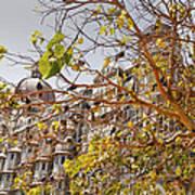 Pigeon Tree At The Taj Poster