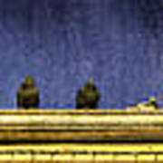 Pigeons On Yellow Roof Poster