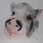 Piggy Pet Portraits Original Watercolor Memorial Made To Order Poster