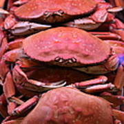 Pile Of Fresh San Francisco Dungeness Crabs - 5d20693 Poster by Wingsdomain Art and Photography