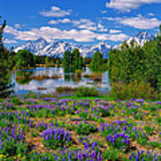 Pilgrim Creek Wildflowers Poster