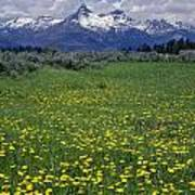 1a9210-pilot Peak And Wildflowers Poster