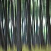Pine Forest. Blurred Poster