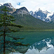 Pine Over Emerald Lake Reflection In Yoho National Park-british Columbia-canada Poster