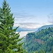 Pine Tree And Columbia River Gorge Poster