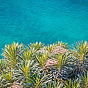 Pine Tree Branches With Turquoise Sea Background Poster