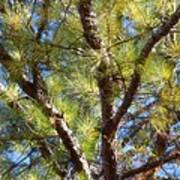 Pine Tree Glow 2014 Poster