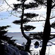 Pine Tree Silhouette Poster