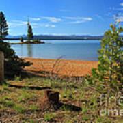 Pine Trees In Lake Almanor Poster