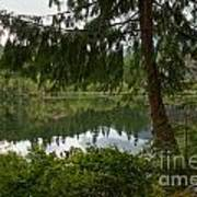 Pine Trees Over Starvation Lake Poster