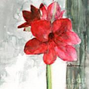 Pink Amaryllis Poster
