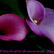 Pink An Purple Calla Lilys Poster