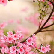 Pink Azalea Bush Poster